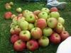 lekkere appels